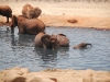 Baby elephants swimming