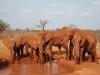 Elephants drinking at a waterhole