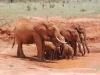 Elephant family at Tsavo